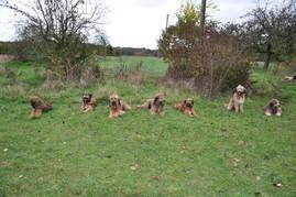N-Wurf vom Auehof - erstes Junghundetreffen 2013