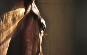 Beratung für Pferdebetriebe