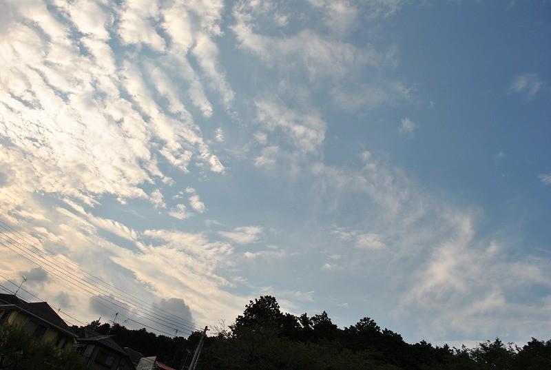 空は、青空になってきた♪