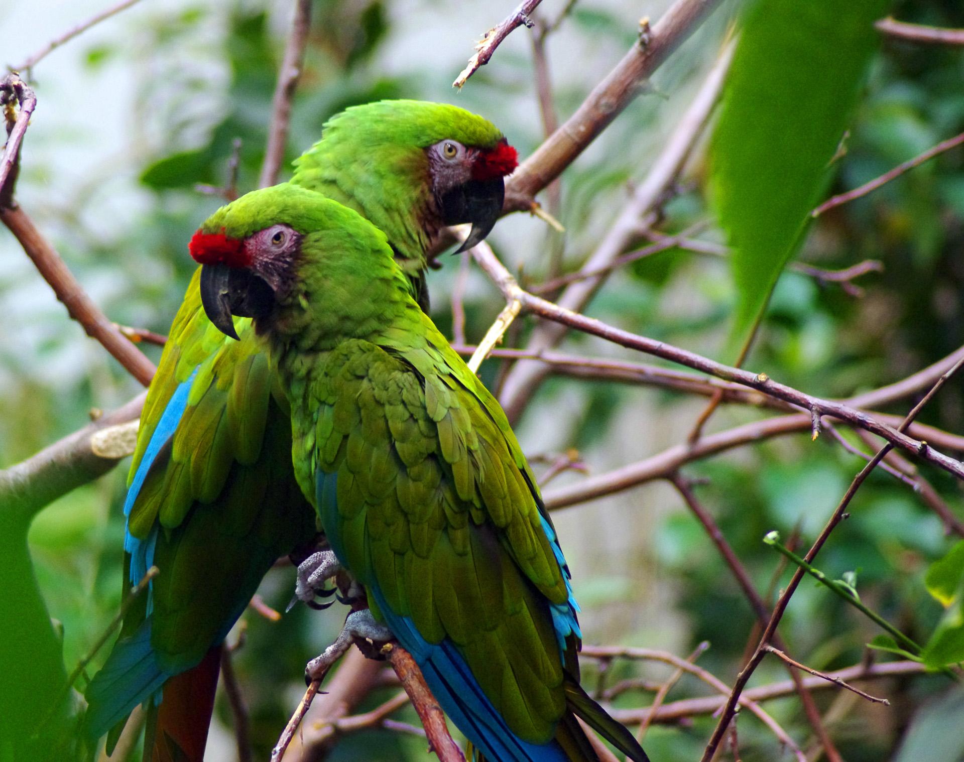 Dimanche 5 février: Un couple de perroquets au Biodôme de Montreal