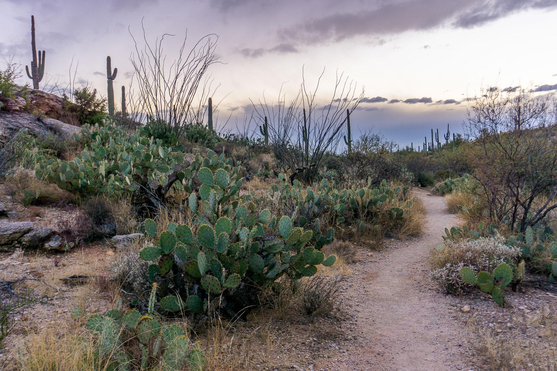 Dimanche 26 février: Coucher de soleil sur le Saguaro National Park, AZ