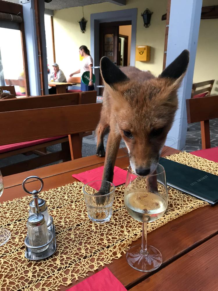 Fox Dinner im Gasthaus Stara Posta