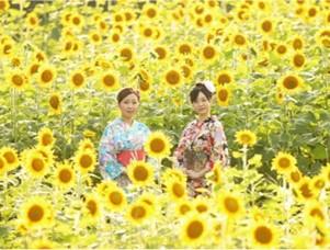 徳田のひまわり畑