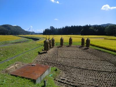 晴天に恵まれ絶好の旅行日和。田んぼは既に一部稲刈りが始まっていました。悠久の時を経ても変わらない風景がここにあります。