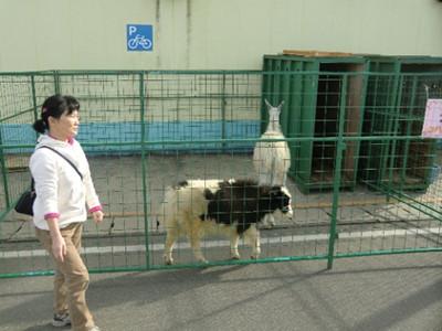 別のゾーンではうさぎやラマなど、動物と触れ合えるコーナーもあり、子供が集まっていました。