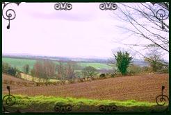 Landscape near the wood henge just west of Bow in mid Devon/ photo Julie Sampson