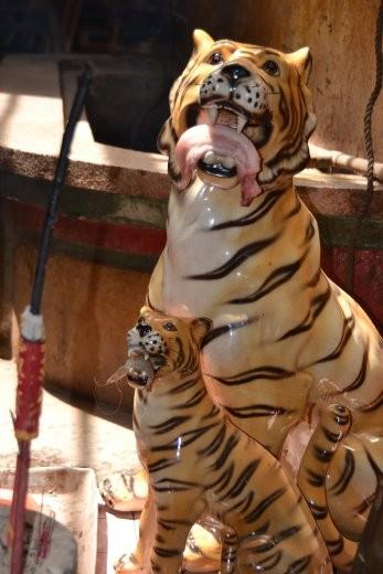Der große Tiger bekommt einen Schweinebauch, der kleine Tiger eine Garnele als tägliche Opfergabe.