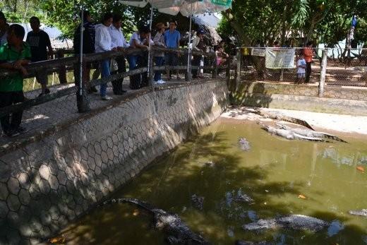 Auf engem Raum werden hier 25 Krokodile gehalten. man kann sie mit Fleisch an einer Angel füttern...