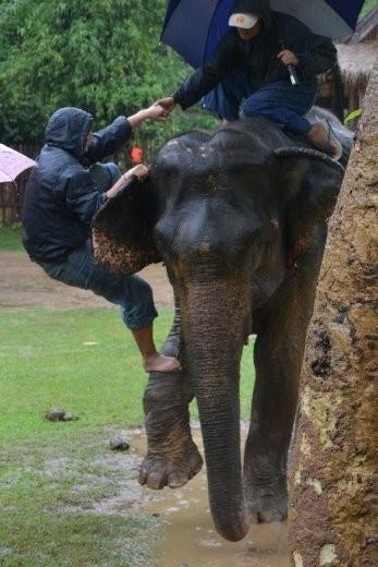 Zum Aufsteigen muss Mae Uak ihr Bein heben, dann kann ich mich mehr oder weniger elegant hochschwingen.