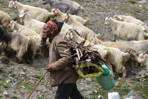 unterwegs im Himachal Pradesh
