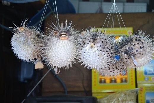 Und Kugelfische werden zu Lampen verarbeitet...