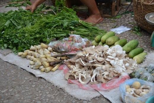 Bambus und Pilze.