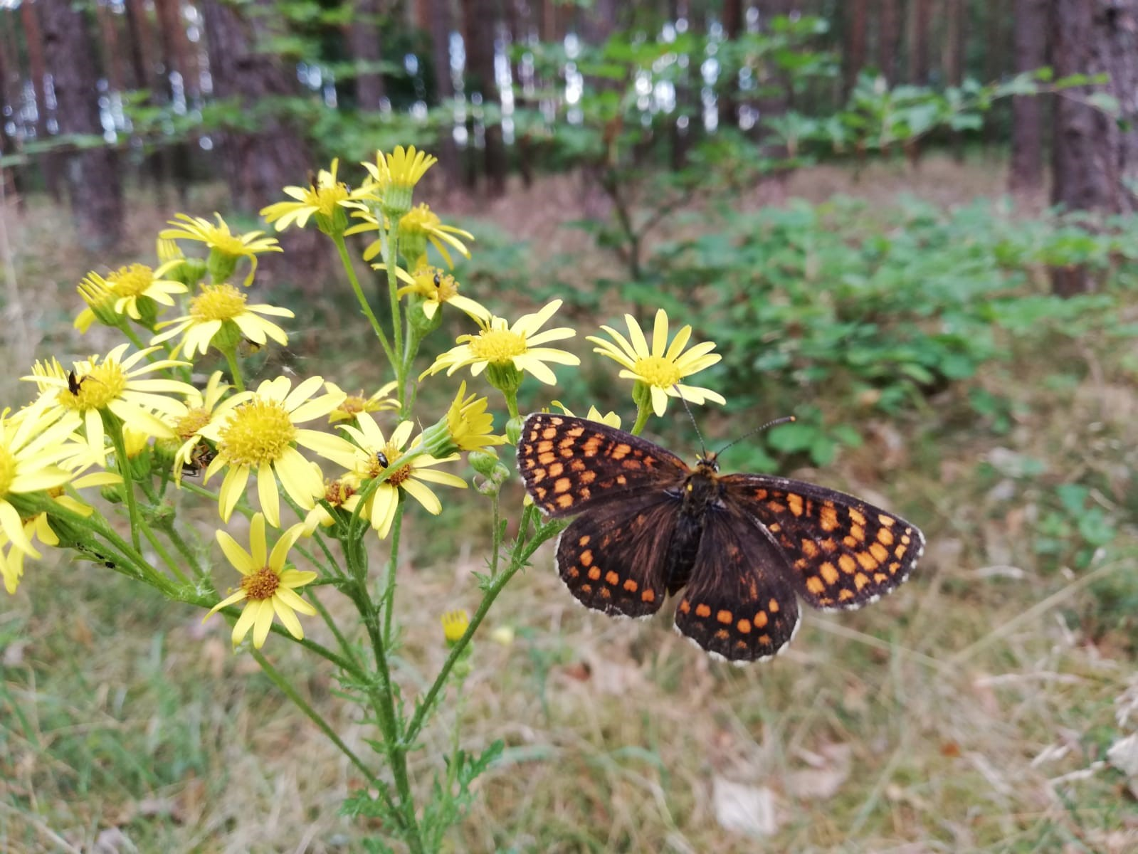 Entdecken und Beobachten in der Natur
