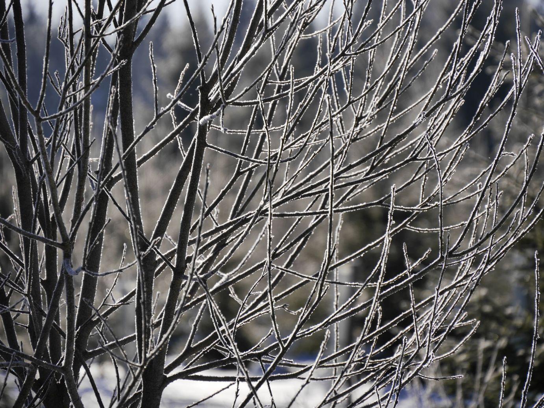 Der Winter zeigt sich in seiner ganzen Pracht