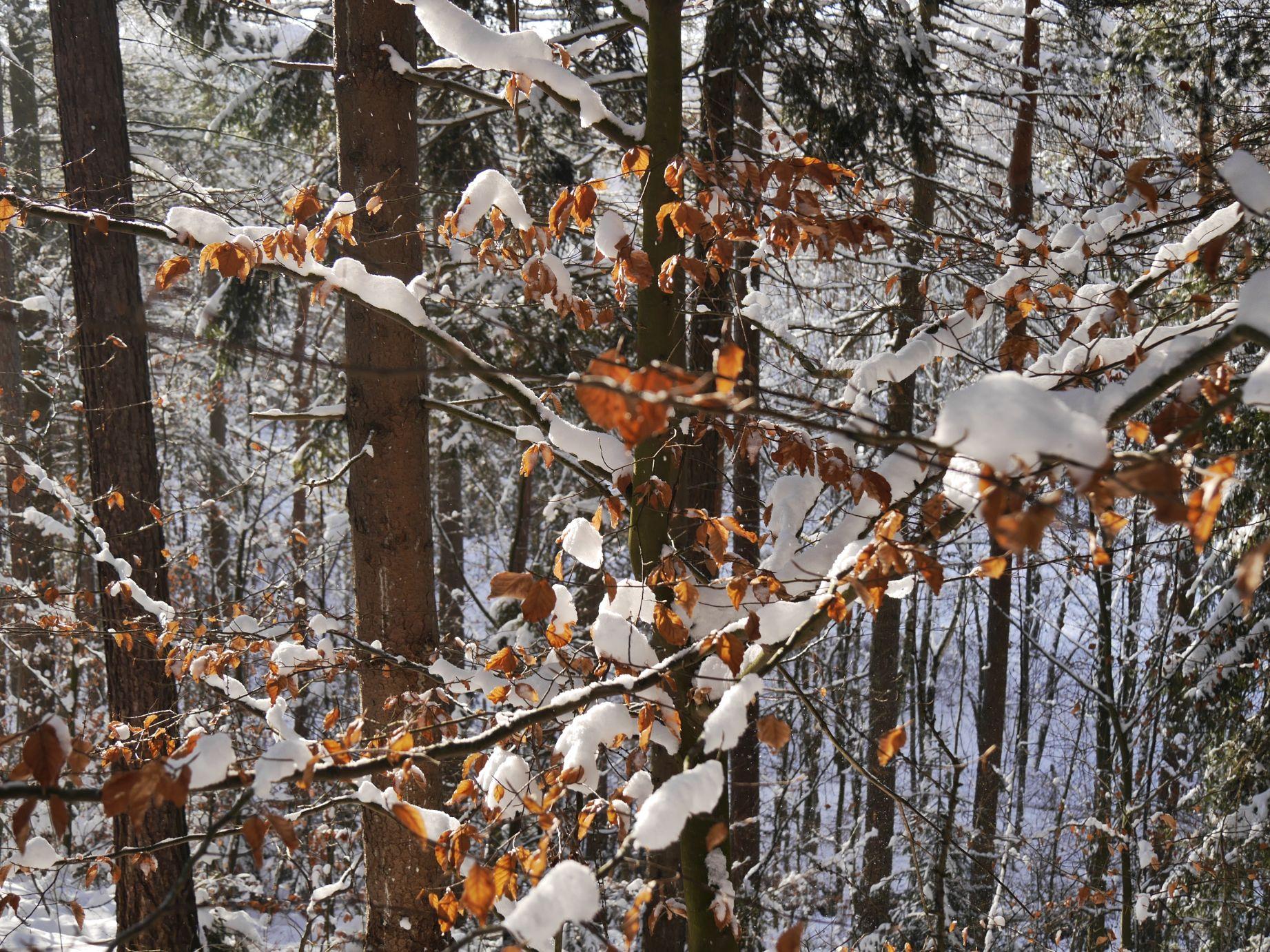 Winterlandschaft am Mühlberg
