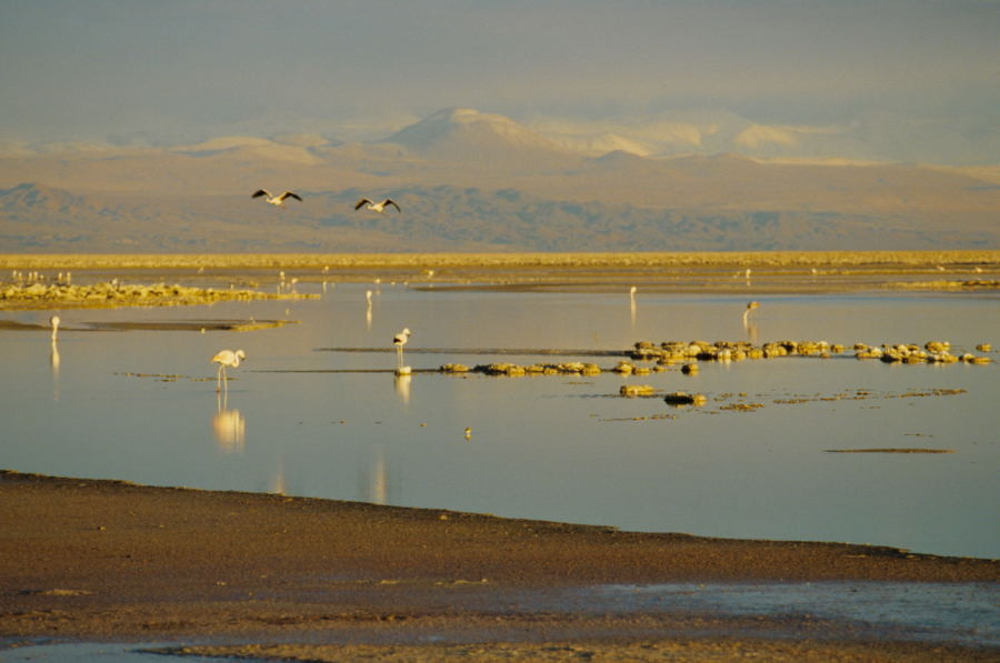 An der Laguna Chaxa
