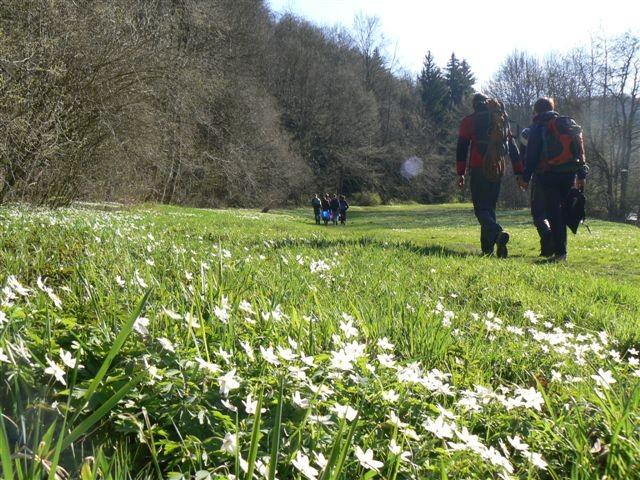 Unser Steinicht - ein Kleinod im Frühling!