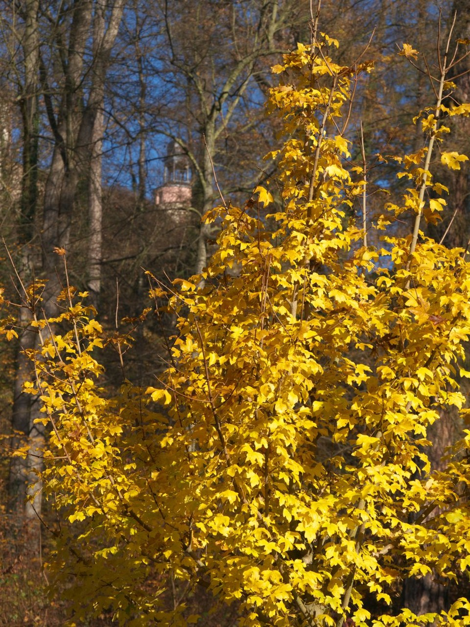 Blick auf Schloss Wolkenburg