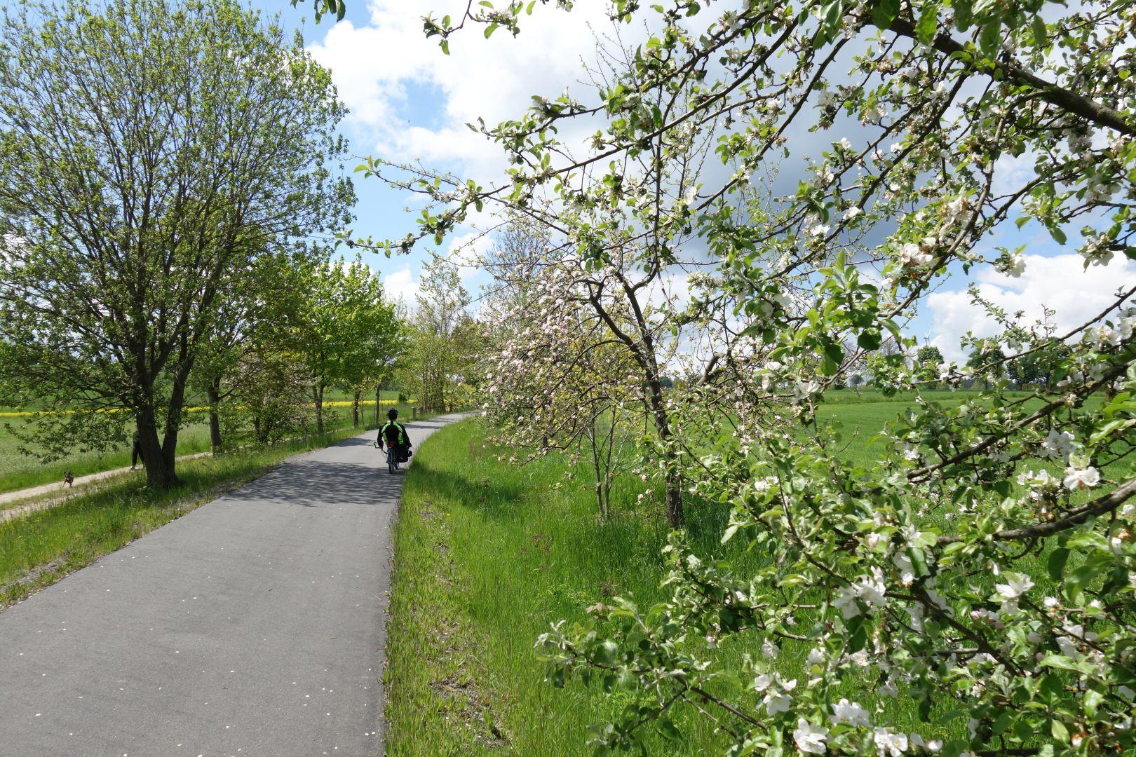 blühende Apfelbäume säumen die Trasse