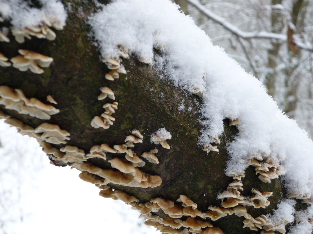 Trotz des Schnees regt sich das Leben