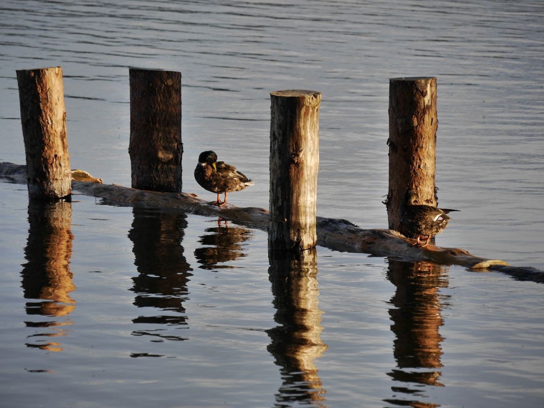 am Jabelschen See