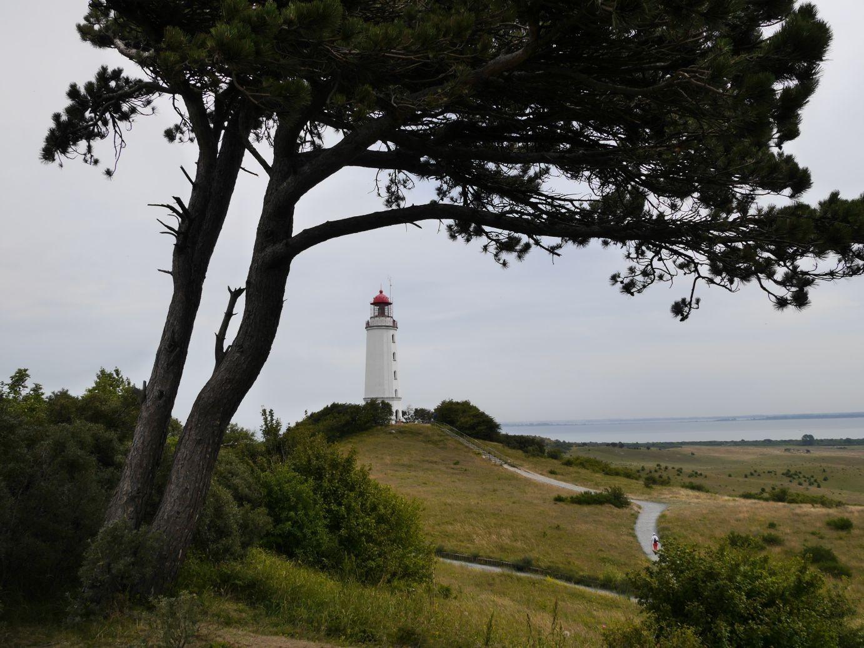 Leuchtturm auf dem Dornbusch