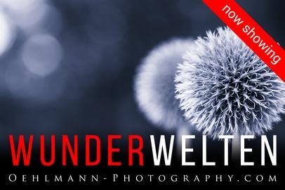 News Banner, Hinterriss, 3D Online Ausstellung Wunderwelten, Dr. Ralph Oehlmann, Oehlmann-Photography