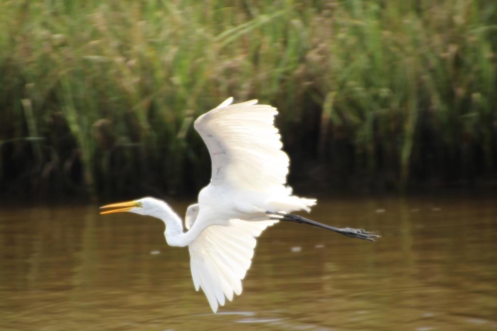 Vogel im Gulf Island National Seashore