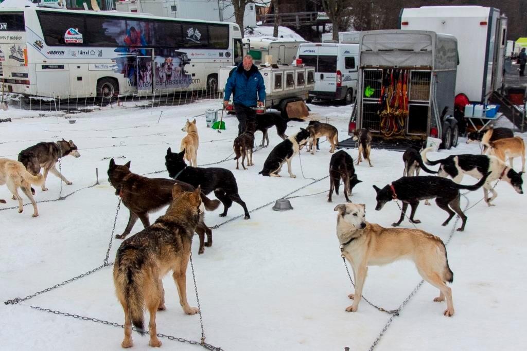 Das ist ein Teil seiner Mannschaft. Zu Hause hat er nochmal 16 Hunde.