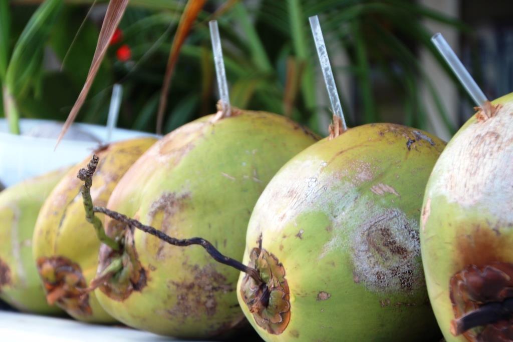 Kokosnüsse - nette Erfrischung zwischendurch