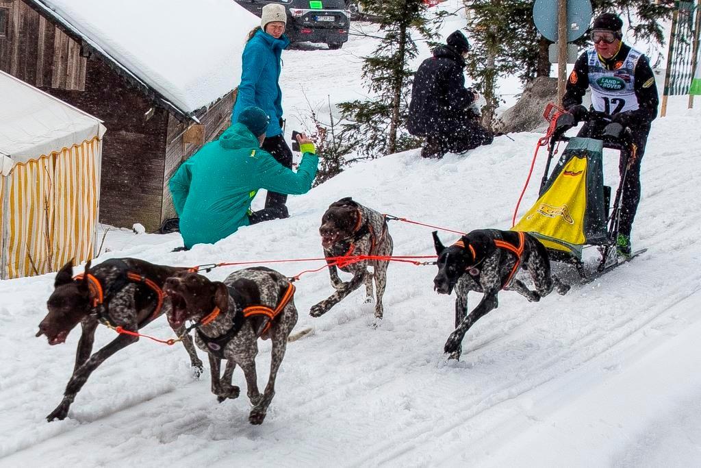 Uwe Radant aus Deutschland wird von seinen vier Hunden mit viel Gebelle den Berg hochgezogen.