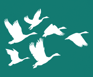 Set of six Geese wall art stickers