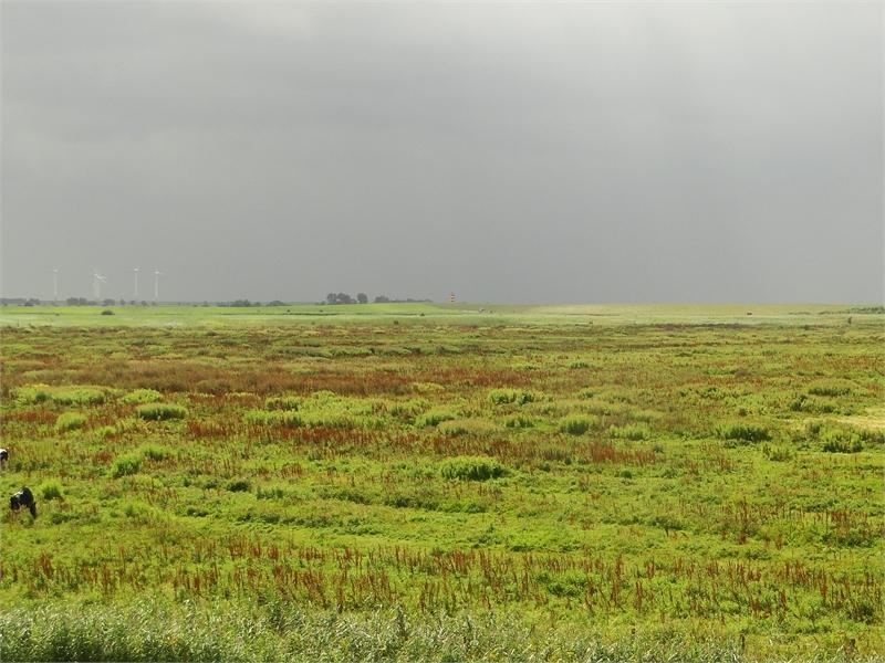 Naturschutzgebiet Leyhörn, © Michael Steven