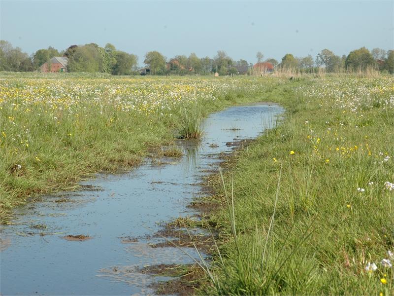 Die Reste nasser Wiesen haben die Wiesenvogelbestände in den Wiegboldsburer Meeden in den letzten Jahren steigen lassen, © Michael Steven