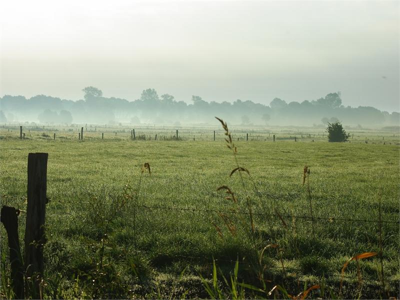 Stimmungsvolle Wiesenlandschaft, © Martin Ulferts