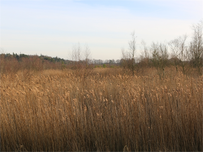"""FFH-Gebiet """"Ochsenweide, Schafhauser Wald und Feuchtwiesen bei Esens"""", © Michael Steven"""