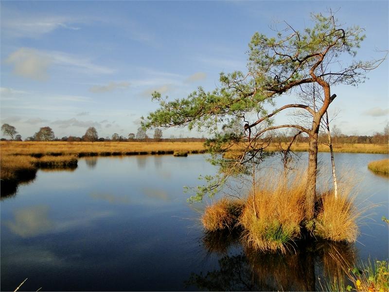 Ehemaliger Torfstich im Naturschutzgebiet Ewiges Meer. © Michael Steven