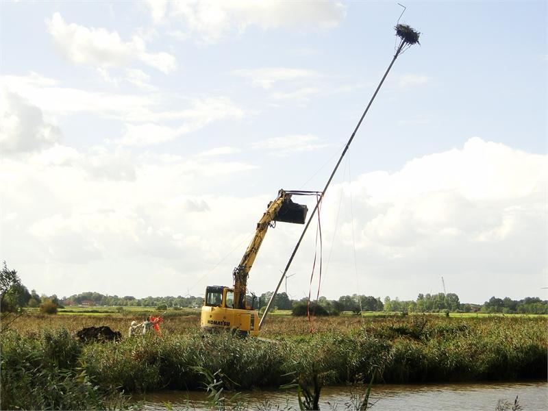 Aufstellen eines Fischadlerhorstes im Bereich des Vogelschutzgebietes Ostfriesische Meere. © M. Steven