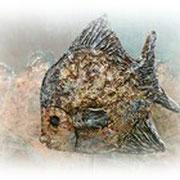 Bluefish - Powertex