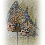 Bluefish couple - Powertex