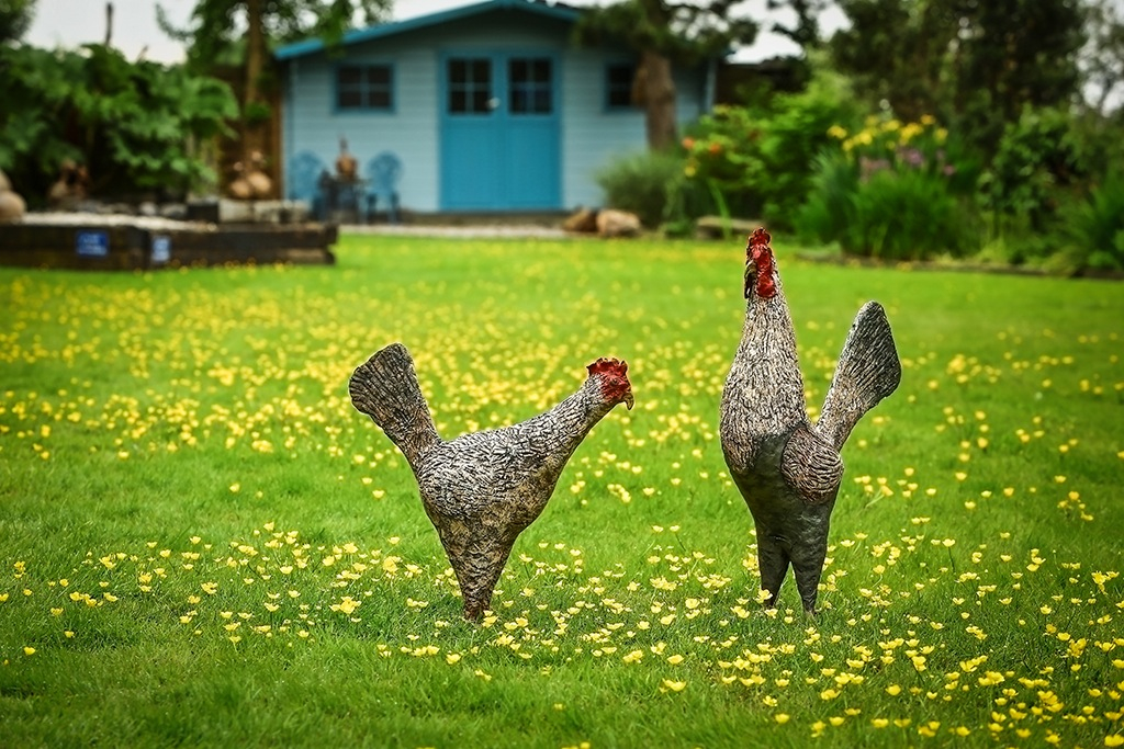 English Chickens