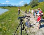 Exkursion zu den Flussregenpfeifern am Alpenrhein