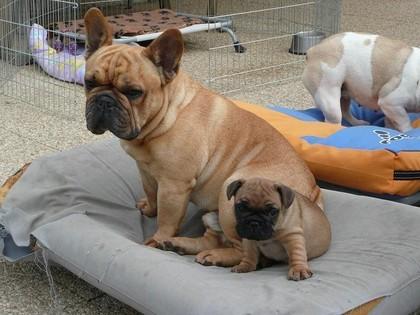 Barney & son fils Eliott