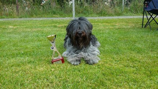 Djeanna-Ly gewinnt den ersten Platz in der Offenen Klasse bei 11 gemeldeten Hündinnen.