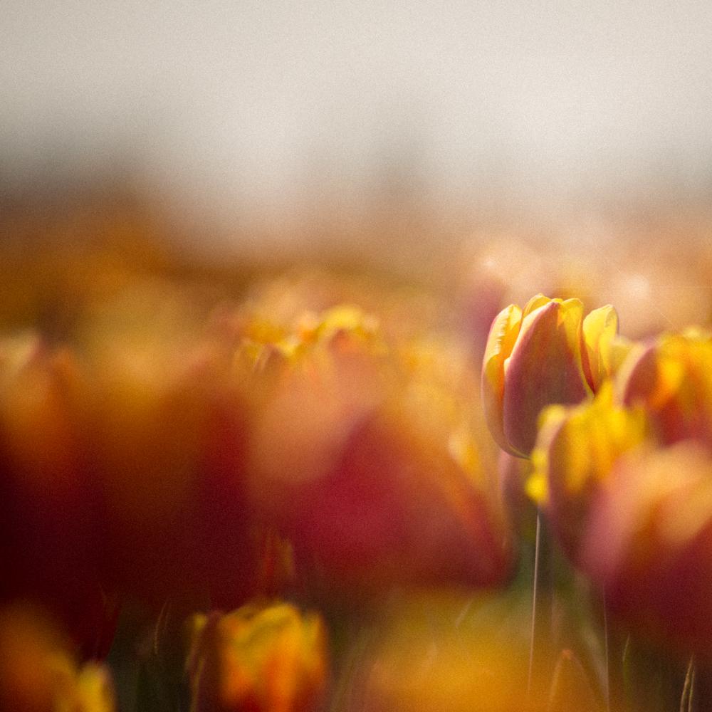 Colors of Spring und die unendliche Leichtigkeit des seins