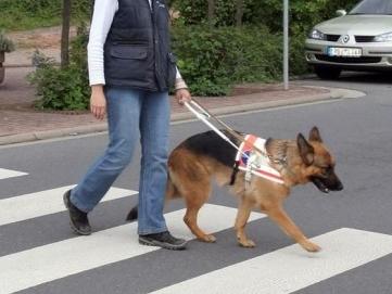 Blindenführhund