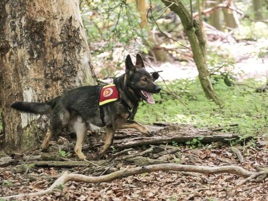 Rettungshunde im Sport und im realen Einsatz