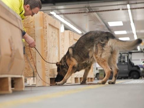 bei Zoll und Militär als Spürhunde gefragt