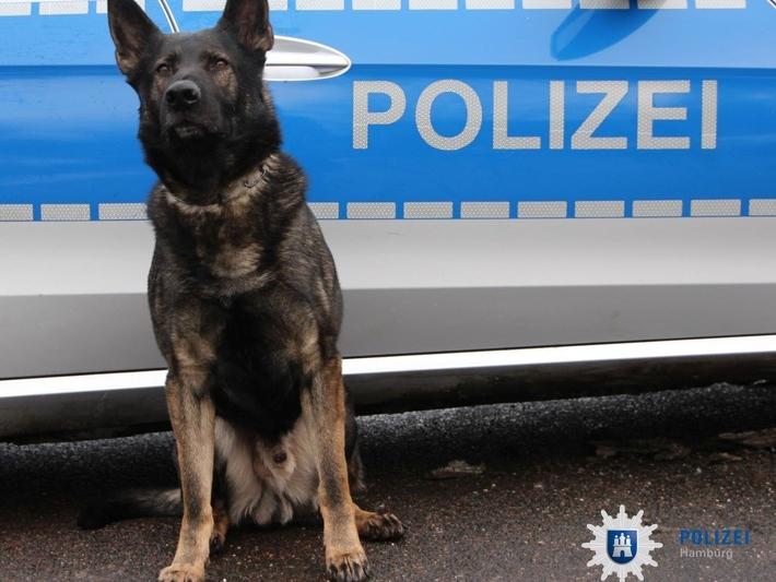 Diensthunde bei der Polizei