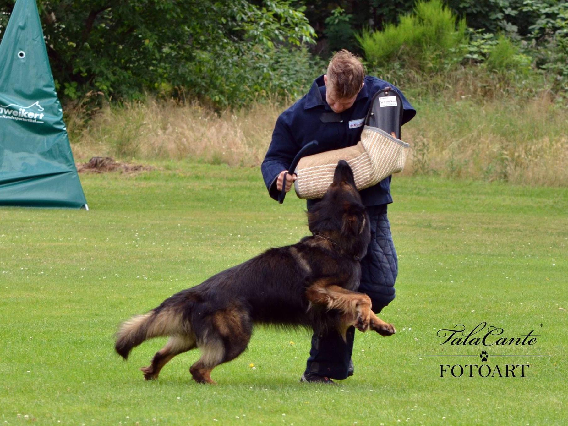 Schutzdienst im Schutzhundesport